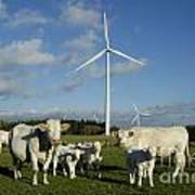 Cows And Windturbines Poster by Bernard Jaubert