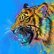 Crazy Tiger Poster by Olga Shvartsur