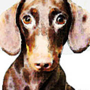 Dachshund Art - Roxie Doxie Poster by Sharon Cummings