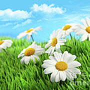 Daisies In Grass Against A Blue Sky Poster by Sandra Cunningham