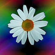 Daisy Bloom In Neon Rainbow Lights Poster by ImagesAsArt Photos And Graphics