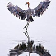Dancing On Water Poster by Robert Jensen