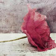 Decor Poppy Horizontal Poster by Priska Wettstein