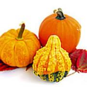 Decorative Pumpkins Poster by Elena Elisseeva