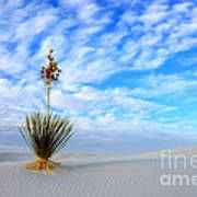 Desert Beauty White Sands New Mexico Poster by Bob Christopher