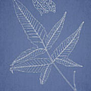 Dictyopteris Barberi Poster by Aged Pixel