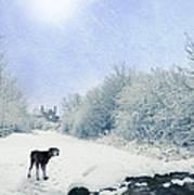 Dog Looking Back Poster by Amanda Elwell