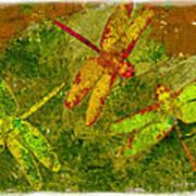 Dragonflies Abound Poster by Jack Zulli