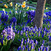 Dreaming Of Spring Poster by Carol Groenen