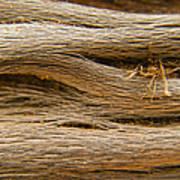 Driftwood 1 Poster by Adam Romanowicz