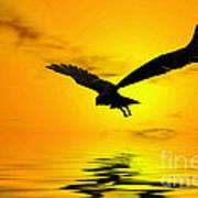 Eagle Sunset Poster by John Edwards