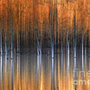 Emerging Beauties Reflected Poster by Marco Crupi
