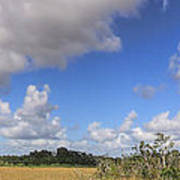Everglades Landscape Panorama Poster by Rudy Umans