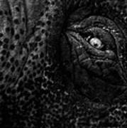 Eye Of The Elephant Poster by Bob Orsillo