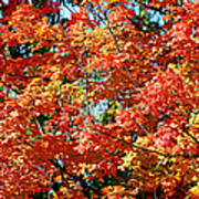 Fall Foliage Colors 22 Poster by Metro DC Photography