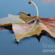 Fall Reflections Poster by Jane Ford