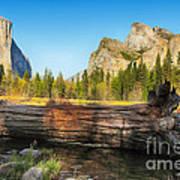 Fallen Tree In Yosemite Poster by Jane Rix