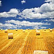 Farm Field With Hay Bales In Saskatchewan Poster by Elena Elisseeva