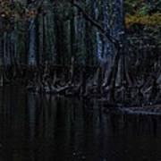 Fisheating Creek 28 Poster by Carol Kay