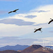 Flight Of The Sandhill Cranes Poster by Mike  Dawson
