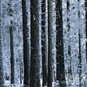 Forest In Winter Poster by Bernard Jaubert