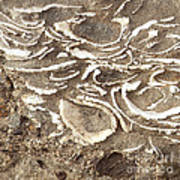 Fossils Layered In Sand And Rock Poster by Artist and Photographer Laura Wrede