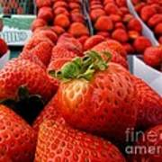 Fresh Strawberries Poster by Peggy J Hughes