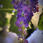 Fruit Of The Vine Poster by Donna Kennedy