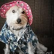 Funny Doggie Poster by Edward Fielding