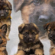 German Shepherd Puppy Collage Poster by Sandy Keeton