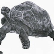 Giant Tortoise Poster by Lucy D