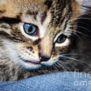 Gizmo Feeling Blue Poster by Terri Waters