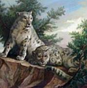 Glamorous Friendship- Snow Leopards Poster by Svitozar Nenyuk