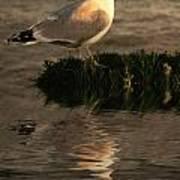 Golden Gull Poster by Sharon Lisa Clarke