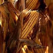 Golden Harvest Poster by Charlene Palmer