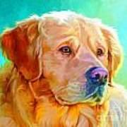 Golden Retriever Art Poster by Iain McDonald