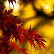 Graceful Leaves Poster by Mike Reid
