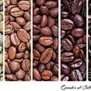Grades Of Coffee Roasting Poster by Jane Rix