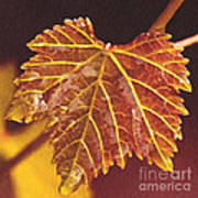 Grapevine In Fall Poster by Artist and Photographer Laura Wrede