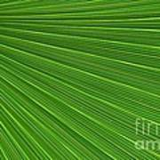 Green Palm Abstract Poster by Kathleen Struckle