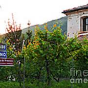 Green Vineyards Poster by Sarah Christian