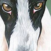 Greyhound Eyes Poster by Leslie Manley