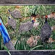 Guinea Fowl In Guinea Grass Poster by Sylvie Heasman