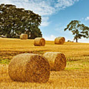 Hay Bales Poster by Amanda Elwell