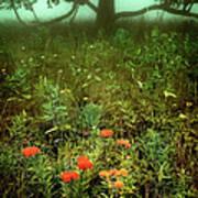 Heaven In The Gloom I - Blue Ridge Parkway Poster by Dan Carmichael