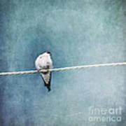 Herald Of Spring Poster by Priska Wettstein