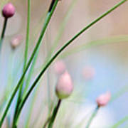 Herb Garden Poster by Kim Fearheiley