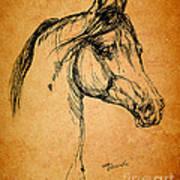 Horse Drawing Poster by Angel  Tarantella