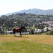 Horse Hill Mill Valley California 5d22662 Poster by Wingsdomain Art and Photography