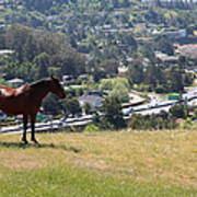 Horse Hill Mill Valley California 5d22663 Poster by Wingsdomain Art and Photography